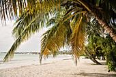 caribbean beach of desire at San Andres island,  Departamento San Andrés and Providencia, Colombia, Caribbean Sea, Southamerica