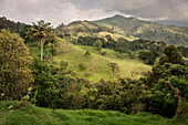 green mountain landscape with palm tree, Salento, UNESCO World Heritage Coffee Triangle, Departmento Quindio, Colombia, Southamerica