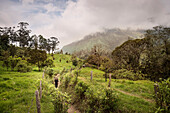 hiking woman at Cocora Valley, Salento, UNESCO World Heritage Coffee Triangle, Departmento Quindio, Colombia, Southamerica