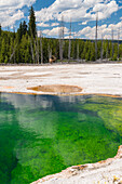 Wapiti deer at a geothermal pool in the West Thumb Geyser Basin, Yellowstone National parc, Wyoming, USA