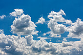 Powerful white cumulus clouds in the blue sky