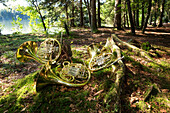 Brass instruments / horns are on tree sticks and Moss in the forest on a lake