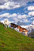 Three goats on a hillside with a backdrop of the Berchtesgadener mountains