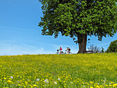 Two Cyclists ride with a helmet and a light luggage in addition to the large Linde at Hagenau between flowering meadows; lovely spring weather and blue sky