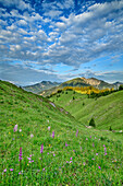 Alpine meadow with Hinteres Sonnwendjoch in background, from Trainsjoch, Mangfall Mountains, Bavarian Alps, Upper Bavaria, Bavaria, Germany