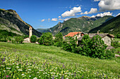 Alpine meadow with flowers with alpine village in background, Val Maira, Cottian Alps, Piedmont, Italy