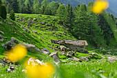 Blumenwiese mit Alm im Hintergrund, Giro di Monviso, Monte Viso, Monviso, Cottische Alpen, Piemont, Italien