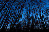 Winter landscape Forest in the moor at blue hour before sunrise