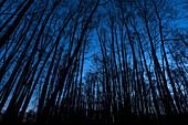 Winterlandschaft Wald im Moor zur Blauen Stunde vor Sonnenaufgang