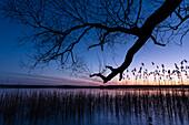 Winterlandschaft Sonnenuntergang am gefrorenem See in Deutschland zur blauen Stunde