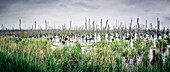 Panorama of a flooded wetland at the Baltic Sea