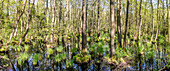 Panorama of a flooded, flooded wetland on the Baltic Sea