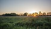 Morgennebel über den Wiesen des Spreewaldes während des Sonnenaufganges