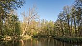 Flusslandschaft im Frühjahr bei Sonnenschein im Spreewald
