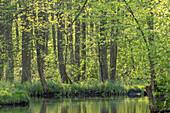 River landscape in spring at sunshine in Spreewald