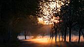 Avenue in Brandenburg to the sunrise in the morning mist