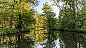 River landscape in early summer in sunshine in Spreewald