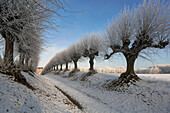 Icy Linde avenue at the Schloss Bothmer, klutz, Mecklenburg-Western Pomerania, Germany
