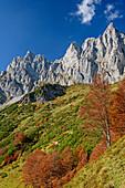 Trees in autumn colours in front of rock walls of Kaiser, Wilder Kaiser, Kaiser range, Tyrol, Austria