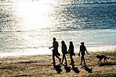Family with dog, walk, Elbe Beach, Rissener Ufer, Hamburg, Germany