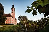 Wein Anbau vor Wallfahrtskirche Birnau, Uhldingen Mühlhofen, Bodensee, Baden-Württemberg, Deutschland