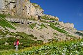 Frau wandert durch Blumenwiese, Hoher Ifen im Hintergrund, Hoher Ifen, Allgäuer Alpen, Walsertal, Vorarlberg, Österreich