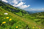 Blumenwiesen mit Gottesackerwände im Hintergrund, Allgäuer Alpen, Walsertal, Vorarlberg, Österreich