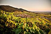 Blick über Weinberge auf das Dorf Neuweier bei der YBurg, Baden-Baden, Baden-Württemberg, Deutschland