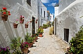 Beautiful alleyway with flowerpots and brillianty whitewashed houses in the hilltop town of Vejer de la Frontera. Cadiz province, Andalusia, Spain.