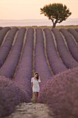 Brunette woman in white dress in a lavender field at sunset, valensole, provence, france.