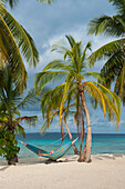 A day visitor from an expedition cruise ship relaxes in a hammock hanging between palm trees on a beach, San Blas Islands, Panama, Caribbean