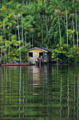 Residents of a wooden house on stilts surrounded by palm trees await visitors from an expedition cruise ship, Amazon River tributary, Pucurui River, Para, Brazil, South America