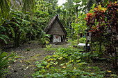 A wooden-frame house with palm leaf thatch roof and walls stands in a clearing among lush vegetation, Lamotrek Island, Yap, Federated States of Micronesia, South Pacific