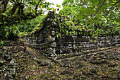 Corner wall construction of stone covered with ferns is part of the Nan Madol ruins built on a lagoon starting around 1180 AD, and listed as a UNESCO World Heritage site, Pohnpei Island, Pohnpei, Federated States of Micronesia, South Pacific