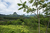 View of the iconic Mount Tohivea (or Tohiea) across lush verdant vegetation, Moorea, Society Islands, French Polynesia, South Pacific