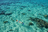A woman in a blue bikini and flippers snorkels on the water surface in the lagoon above patches of dark coral, Bora Bora, Society Islands, French Polynesia, South Pacific