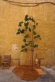 Young Tree, Decoration, Al Seef, Bur Dubai, Dubai, UAE, United Arab Emirates