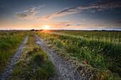 field, footpath, sunset, Dykhausen, Sande, Friesland - district, Lower Saxony, Germany, Europe