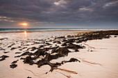 beach, sunrise, volcanic landscape, Corralejo, La Oliva, Fuerteventura, Spain, Europe