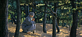 Buddhist monk praying in a forest near Haeundae, Busan, Haeundae, Busan, South Korea, Asia