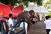 am Buddha-Tempel Aluthgama bei Bentota, Westküste, Sri Lanka
