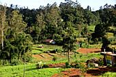 Agriculture near the Horton Plains near Nuwara Eliya, Sri Lanka