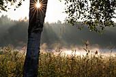 Morgenstimmung am See, Waldweiher, Huber See, Penzberg, Oberbayern, Deutschland