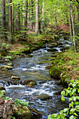 creek Kleine Ohe in forest, Bavarian Forest National Park, Lower Bavaria, Germany, Europe