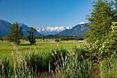 Murnauer Moos, Ramsach, Wettersteingebirge, Alpen, Landkreis Garmisch-Partenkirchen, Oberbayern, Bayern, Deutschland, Europa