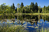 Pond with water lilies, Kochelseemoos, Upper Bavaria, Germany, Europe