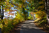 road in mixed forest in autumn, Fagus sylvatica, Upper Bavaria, Germany, Europe
