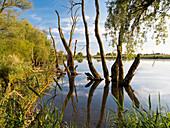 Donauauen bei Gmünd, Gmünder Au, Niederbayern, Bayern, Deutschland, Europa