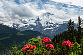 view to the mountains of Mönch and Jungfrau, Alps, Bernese Oberland, Switzerland, Europe