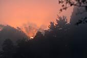 Sonnenaufgang über dem Wald, Bayern, Deutschland